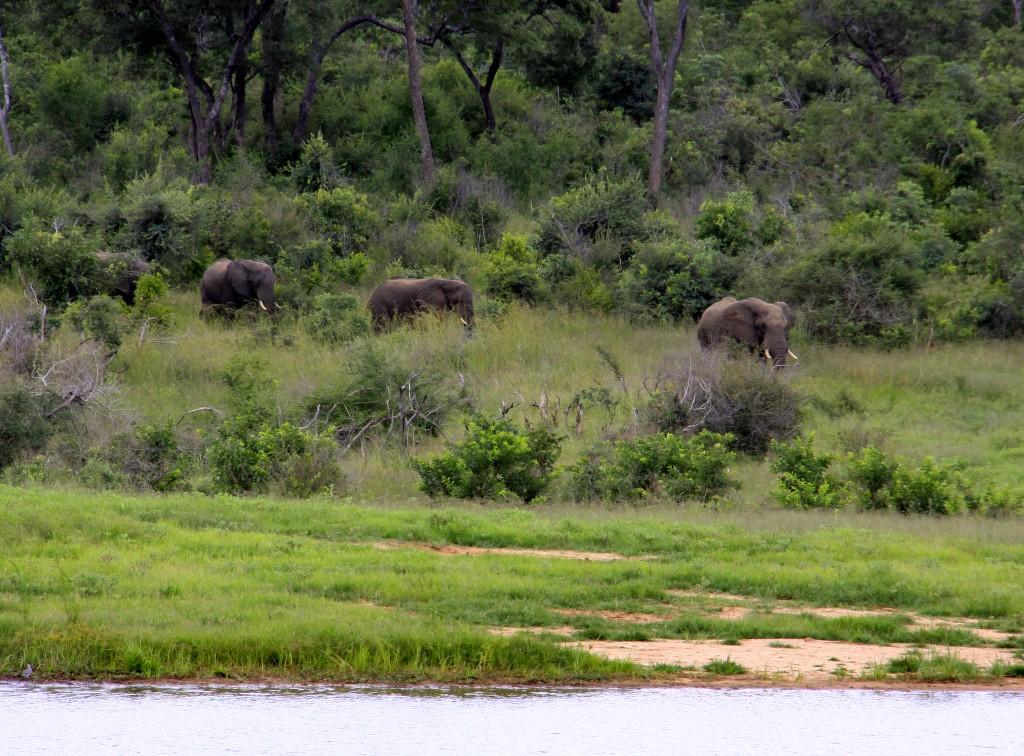 03. Elefanter Ivory Lodge, Zimbabwe (3)