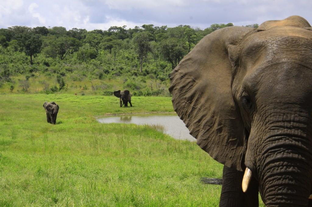 04. Elefanter Ivory Lodge, Zimbabwe (37)