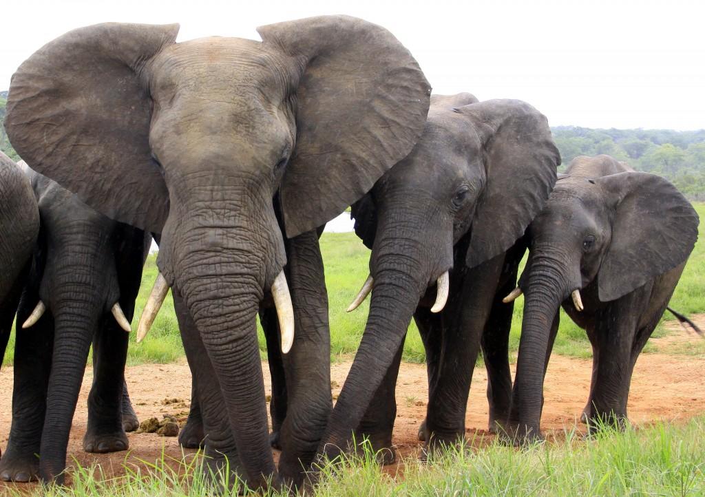 07. Elefanter Ivory Lodge, Zimbabwe (43)