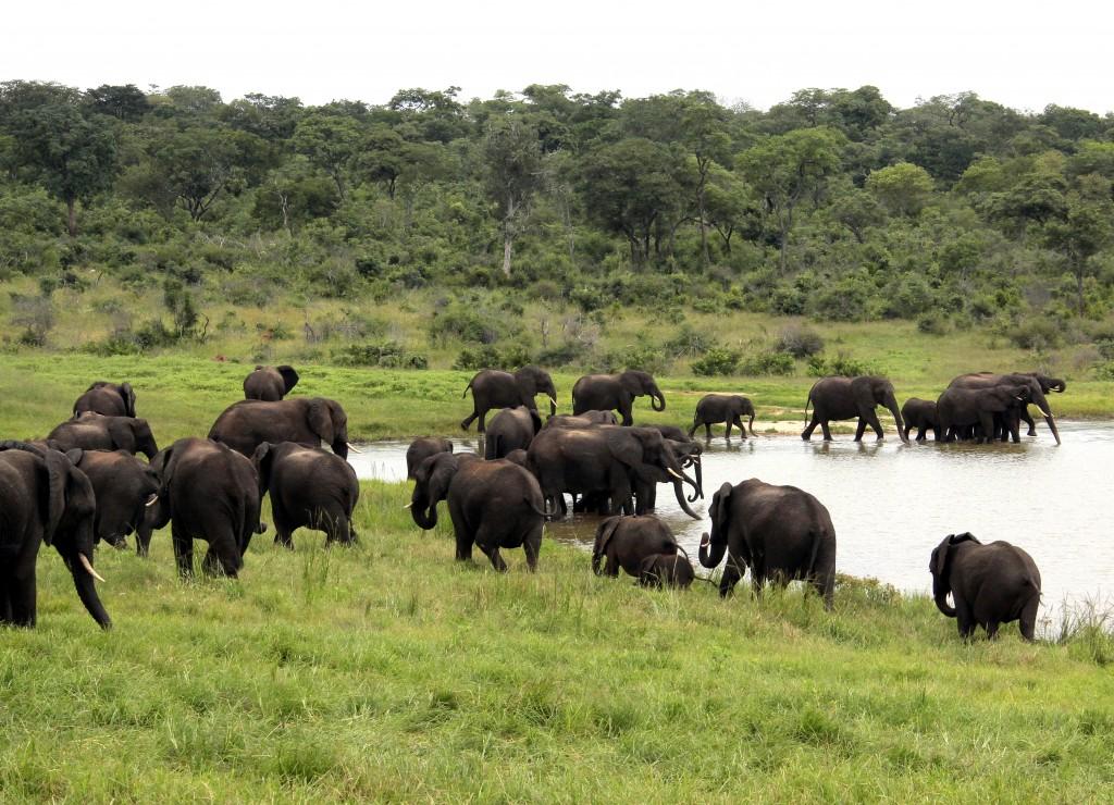 07. Elefanter Ivory Lodge, Zimbabwe (5)