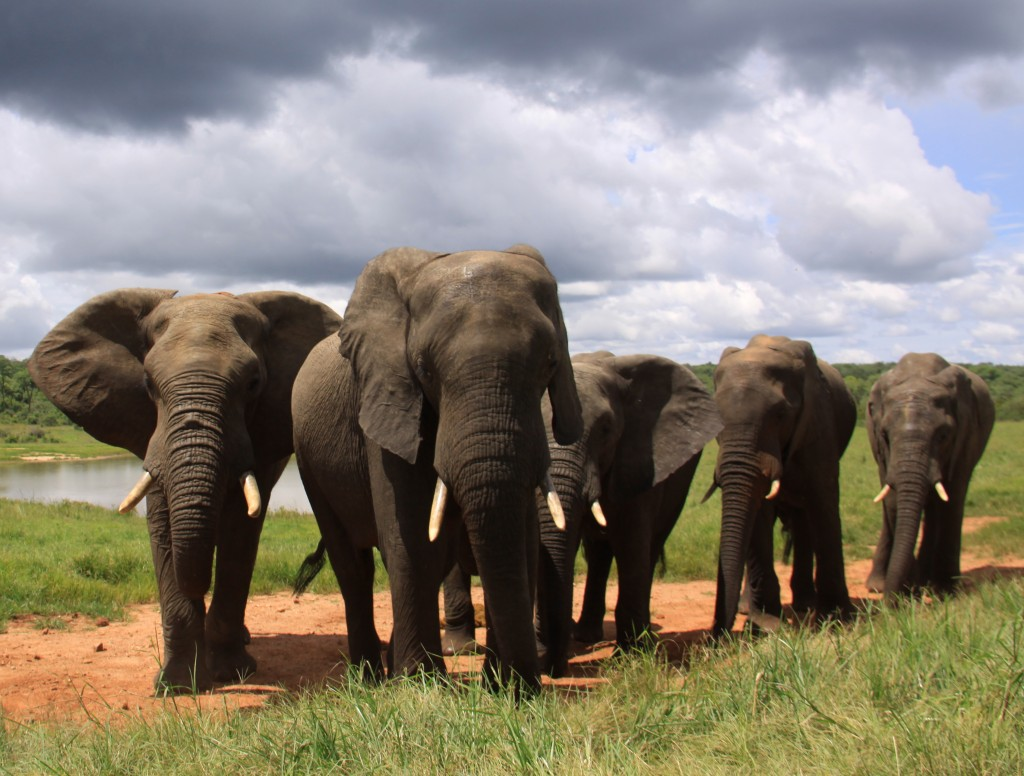 07. Elefanter Ivory Lodge, Zimbabwe (54)