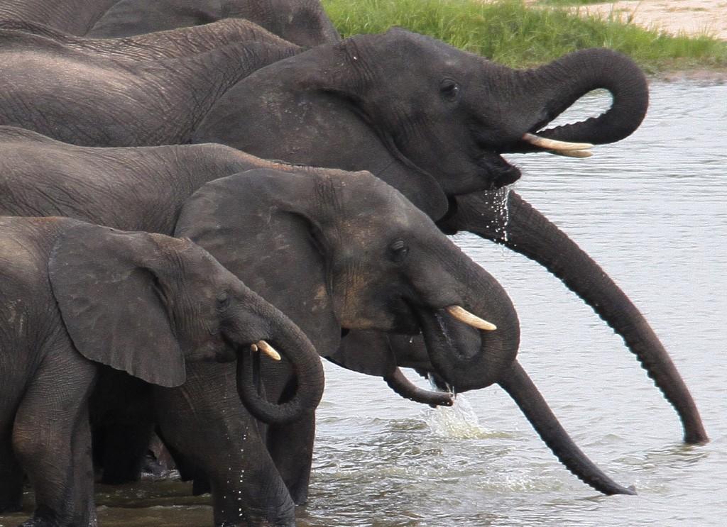 07. Elefanter Ivory Lodge, Zimbabwe (9)b