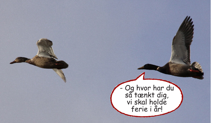 Dagens fugle1