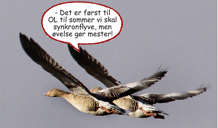 Dagens fugle1b