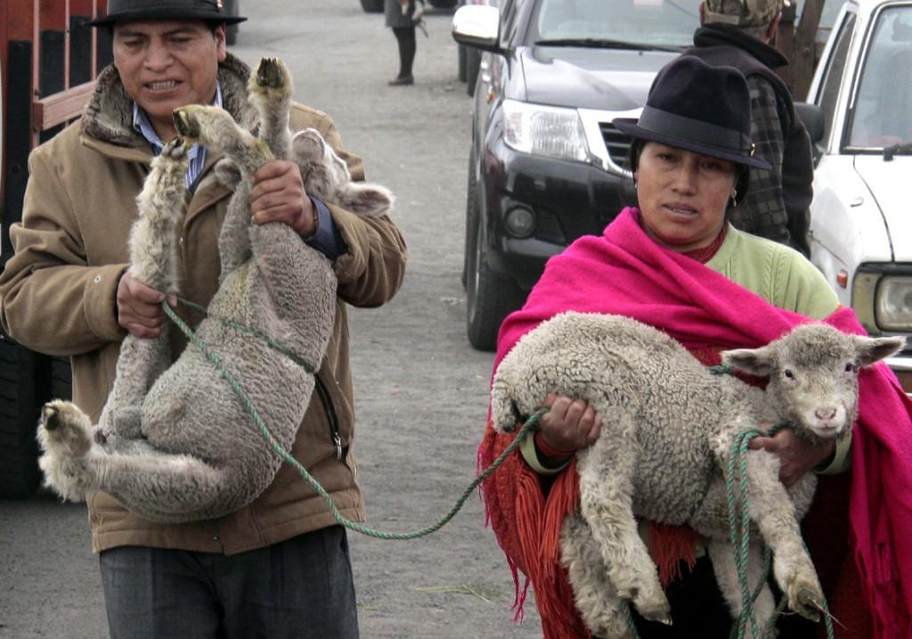 Ecuador - dyremarked (1)