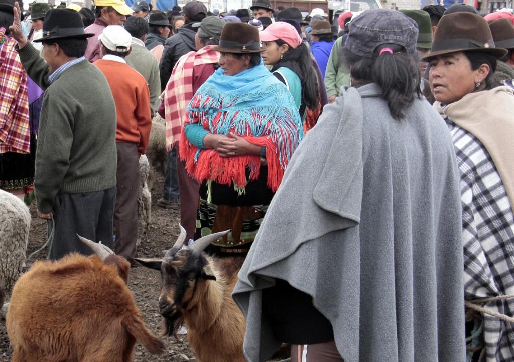 Ecuador - dyremarked (11)