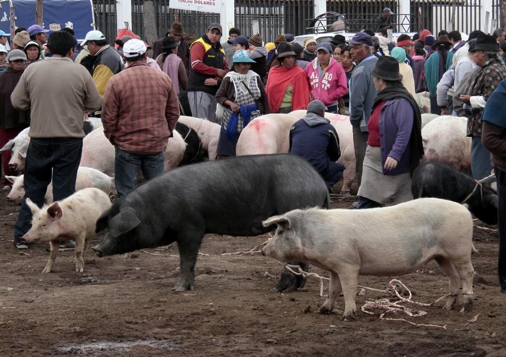 Ecuador - dyremarked (13)