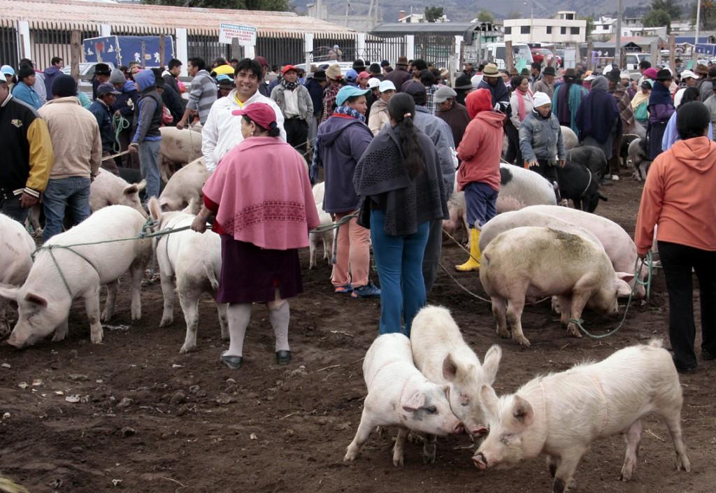 Ecuador - dyremarked (14)