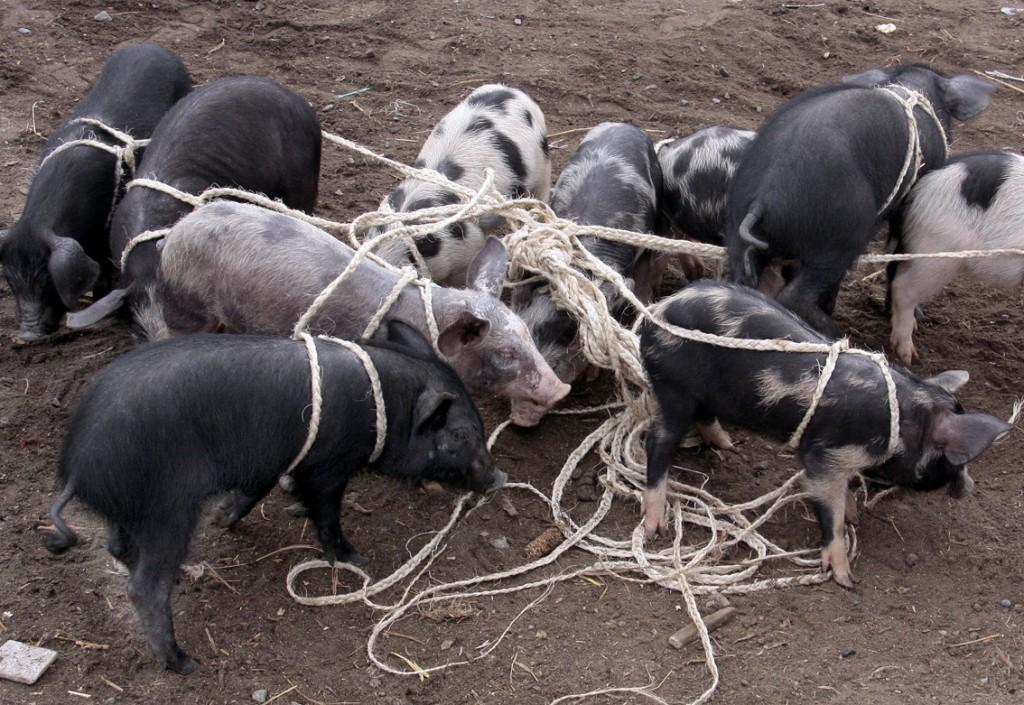 Ecuador - dyremarked (17)