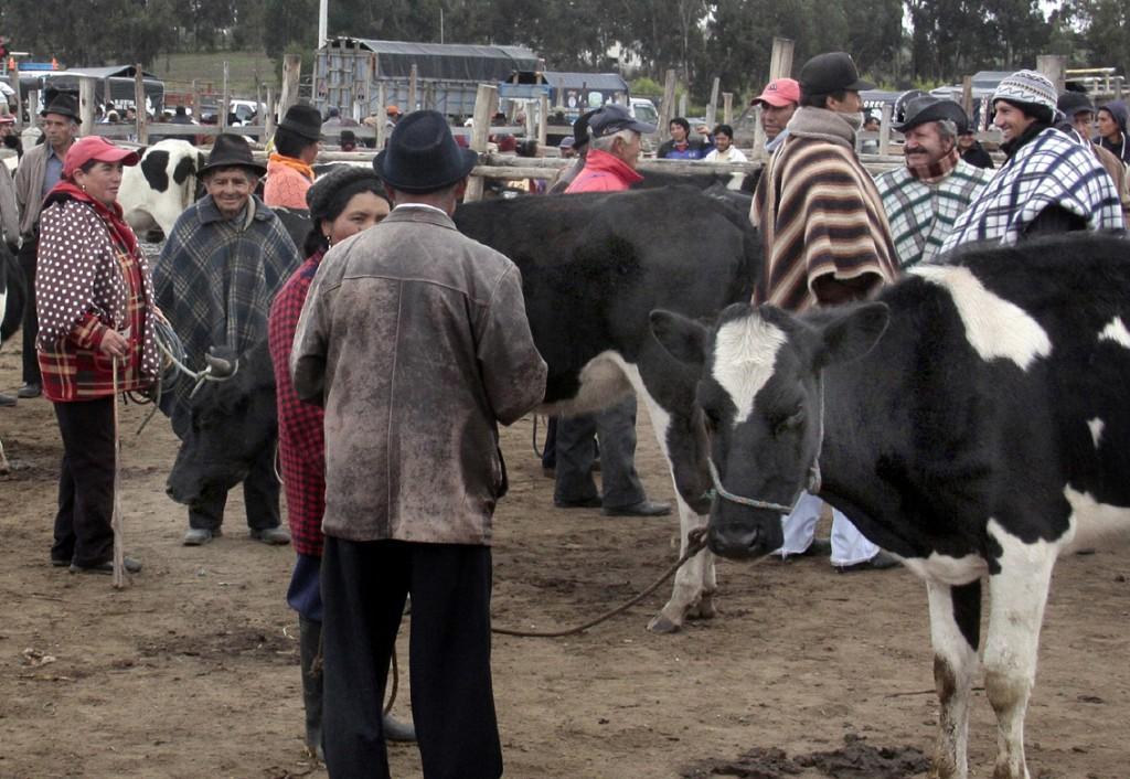Ecuador - dyremarked (2)