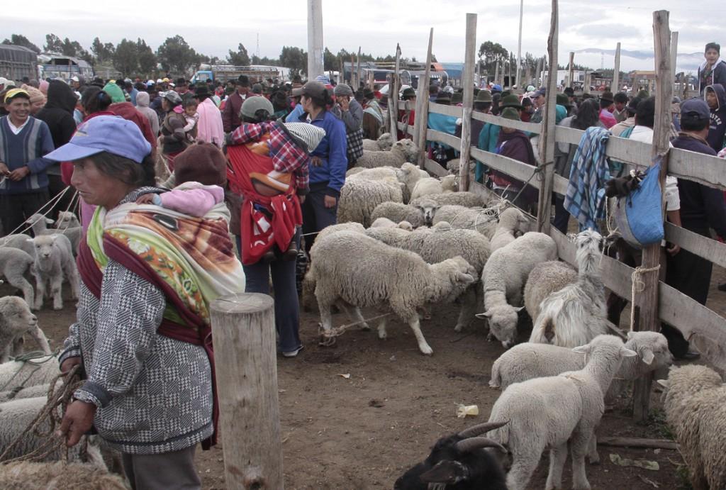 Ecuador - dyremarked (3)