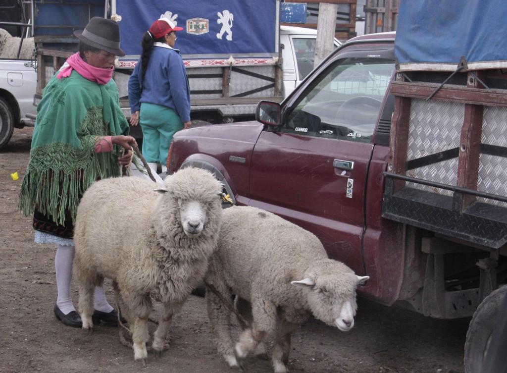Ecuador - dyremarked (4)