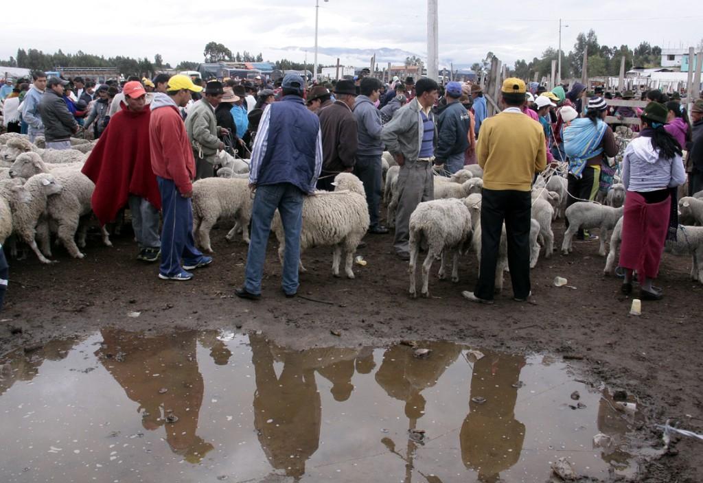 Ecuador - dyremarked (5)