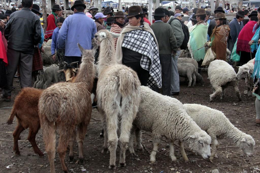 Ecuador - dyremarked (8)