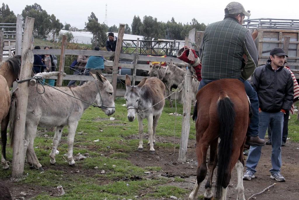 Ecuador - dyremarked (9)