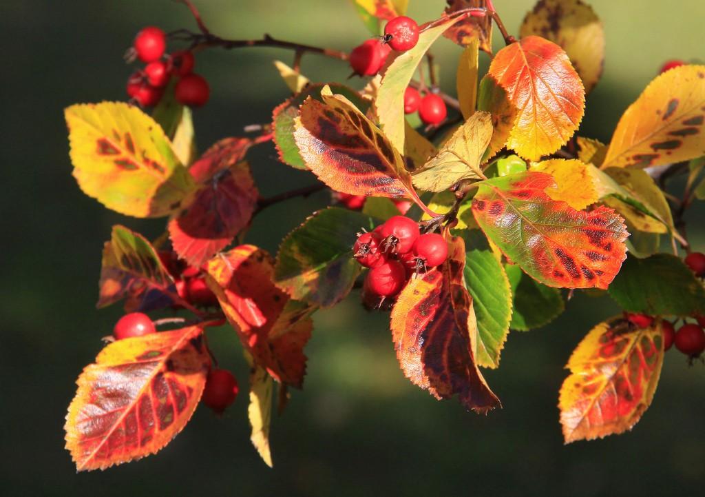 Efterår (14)