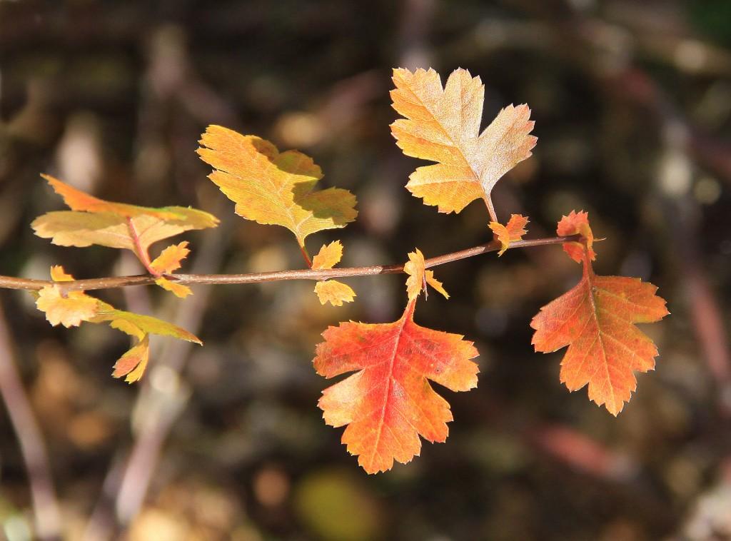 Efterår (15)