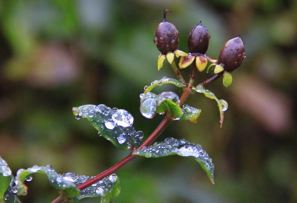Efterår (3)