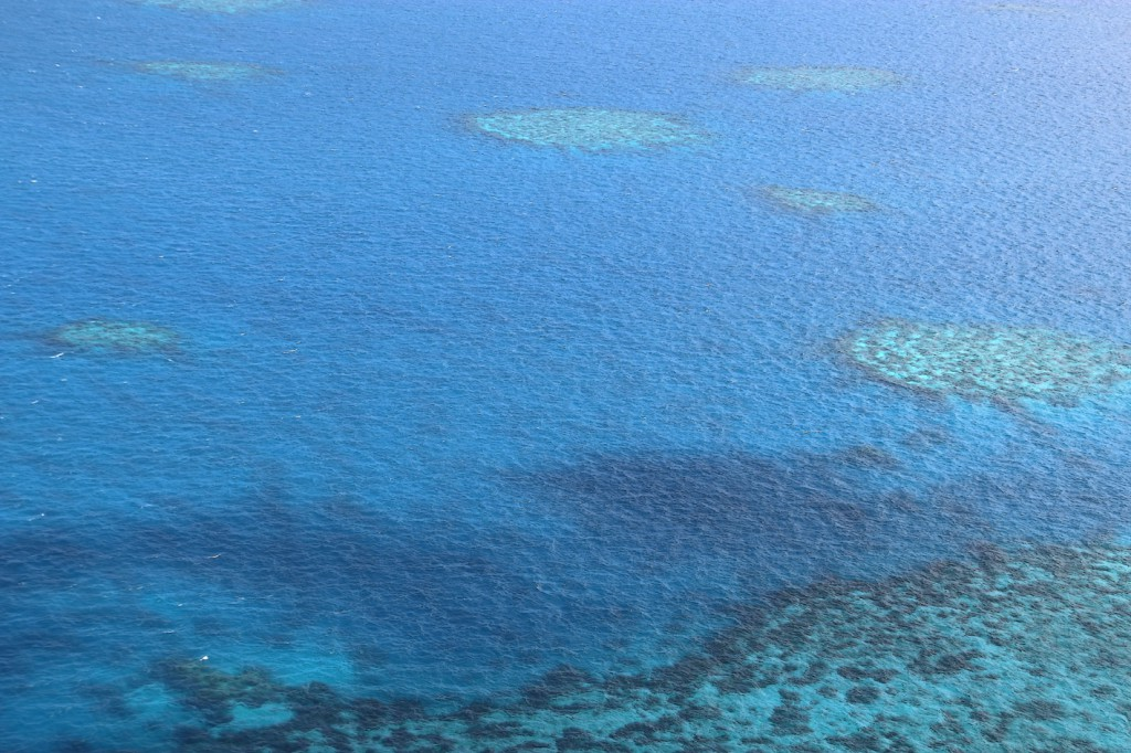 Great Barrier Reef (16)