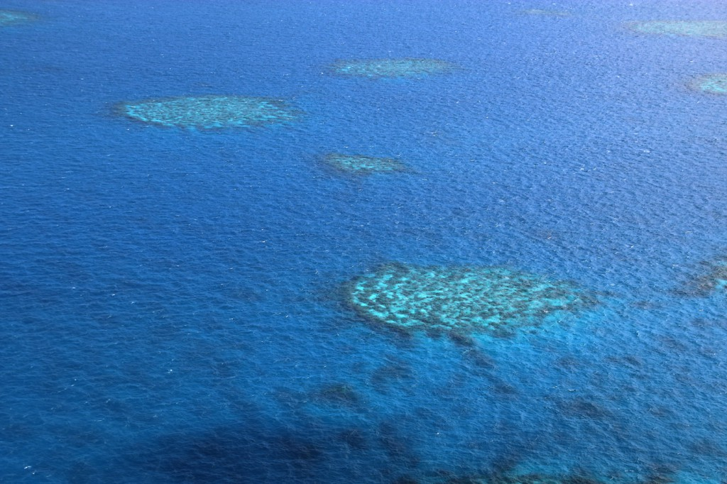 Great Barrier Reef (17)