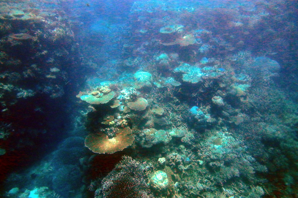 Great Barrier Reef (3)