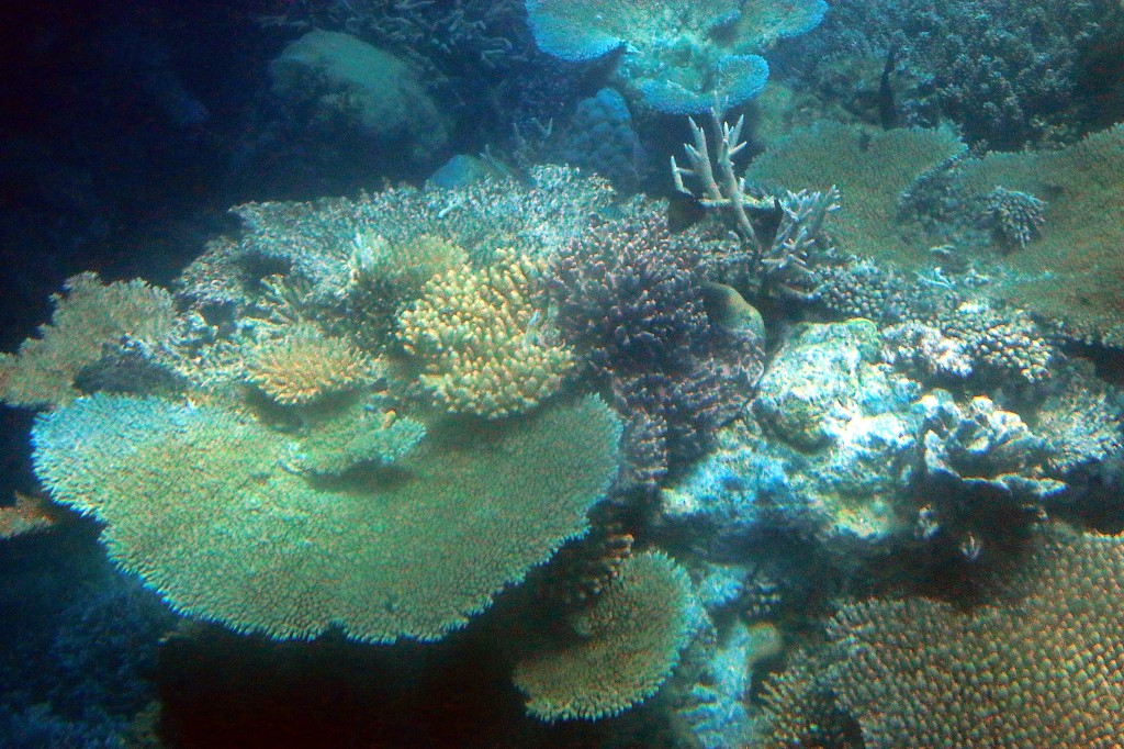Great Barrier Reef (4)