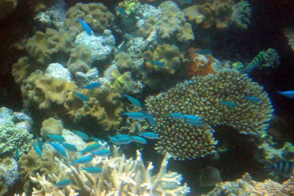 Great Barrier Reef (6)