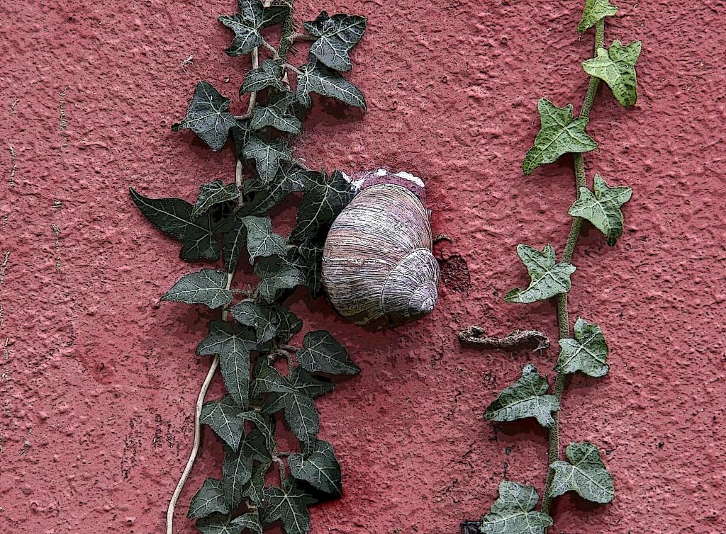 Snegl på væg