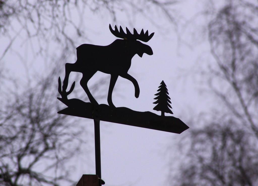 Sverige Öland (6)