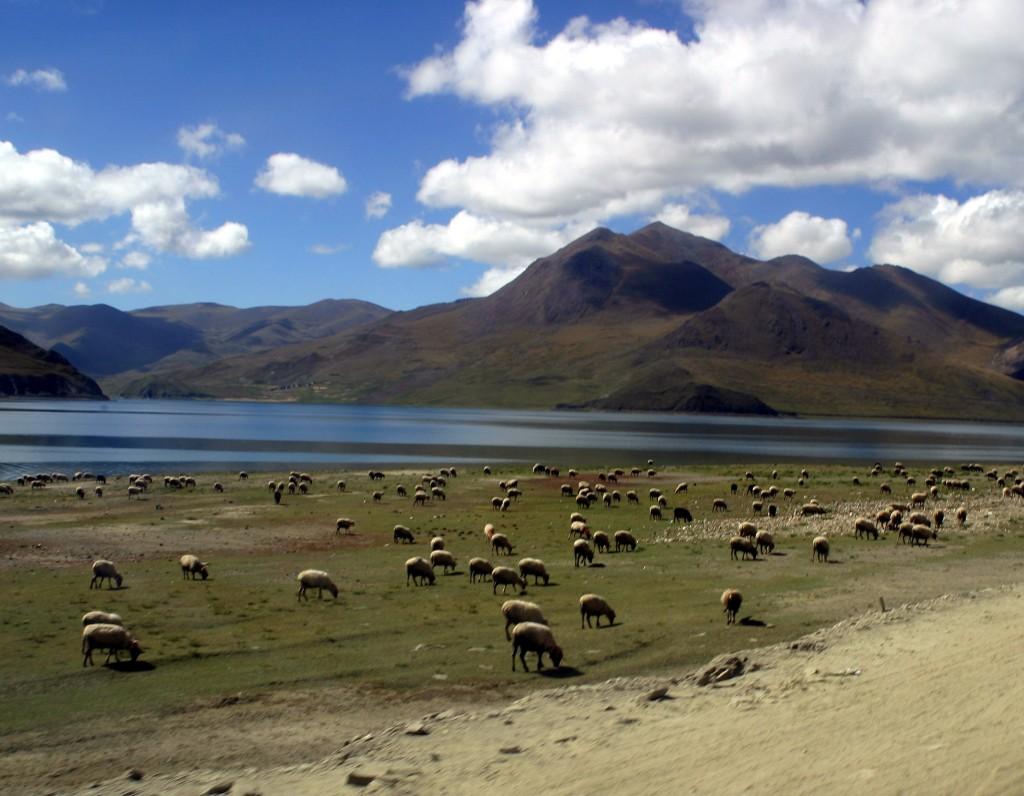 Tibet (13)